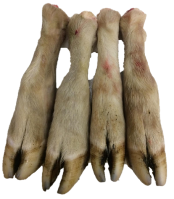 4 x Lamb Feet with fur for Working Dogs *ADD ON ITEM