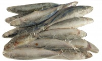 Frozen Whole Fish 1 Kg (Ordered with dog food).